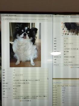 IMG_5377_compressed.jpg